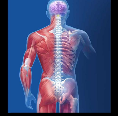 musculoskeletalpic
